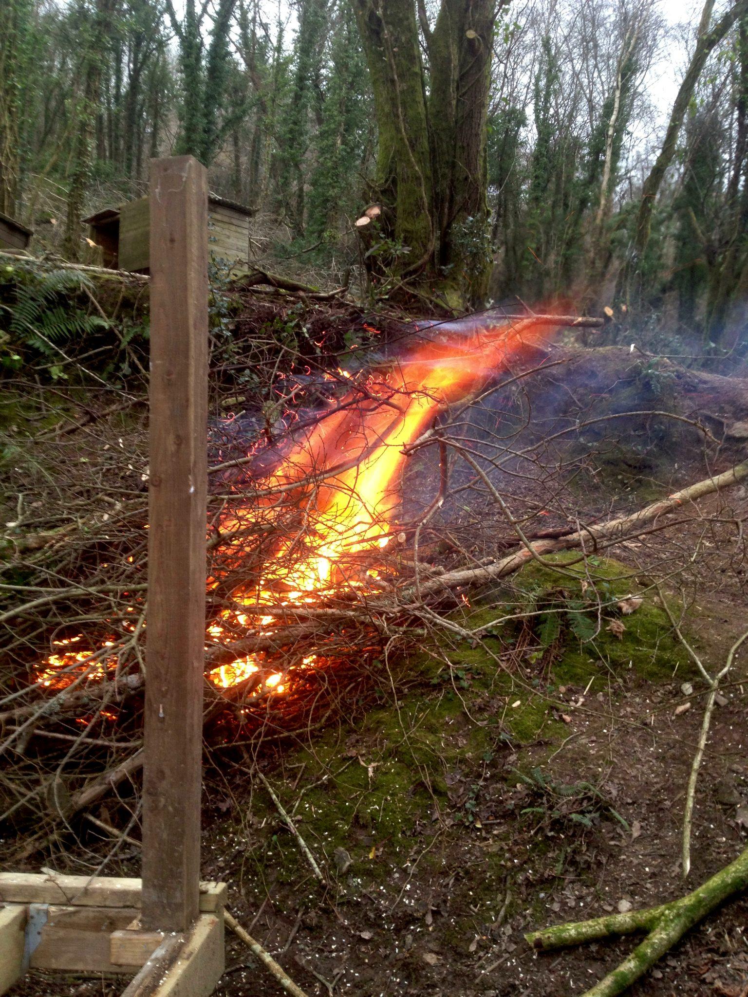Bonfire at Wild Woods
