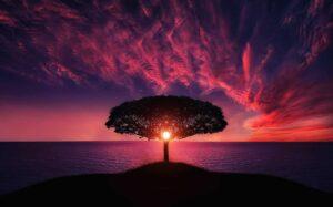tree in a purple sunset