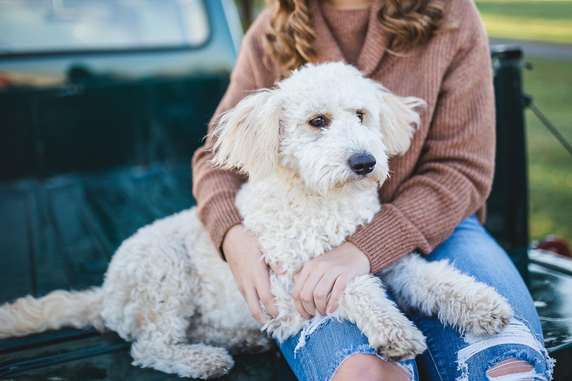 Dog cuddled by woman
