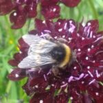 A bee enjoying the nectar from one of our flowers