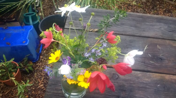 Beautiful flowers from our garden